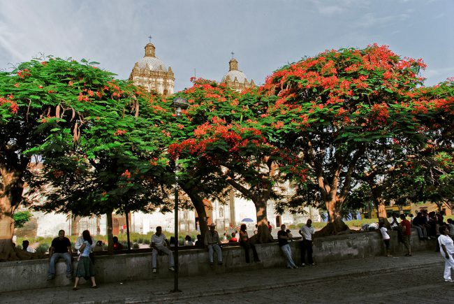 The flowered Santo Domingo de Guzmán church square of Oaxaca, Mexico.