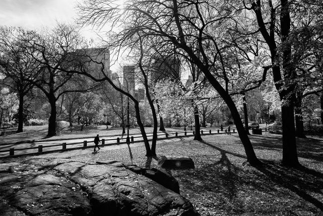 A man walks in Central Park in New York City.