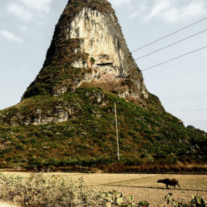 In south China, around Yangshuo, a cow is in a field at the foot of a karst mountain.