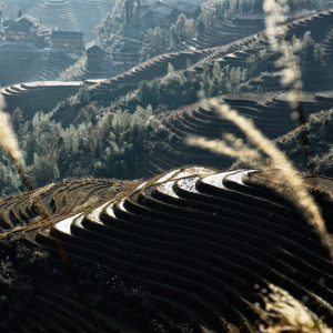 The rice terraces extend out of sight on the hills of Longji.