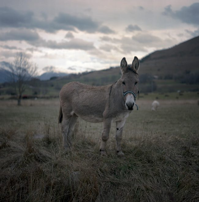 Portrait of a donkey in Hautes-Alpes.