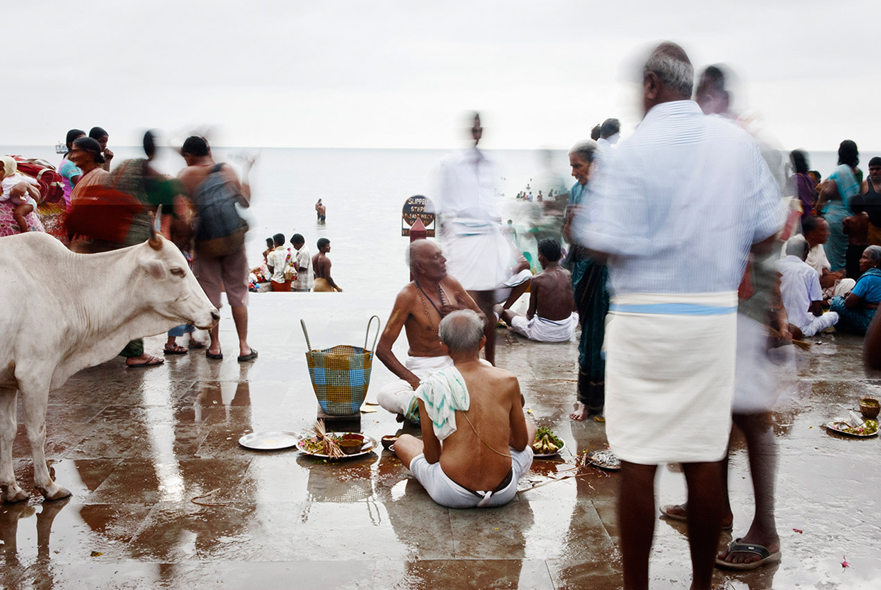 The preparation of the offerings to the sea by the Brahmans under the gaze of a sacred cow in Rameswaram