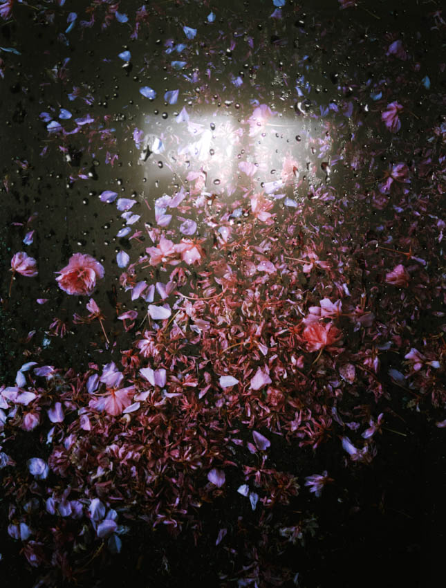 The bathroom and the flower petals